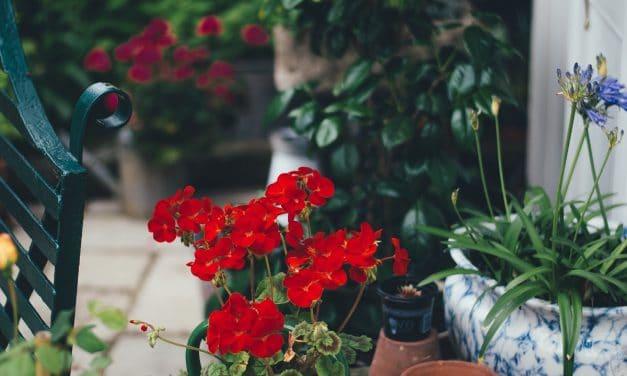 5 nieszablonowych roślin do Twojego ogrodu